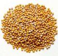 Mustard-seed1-300x291